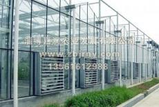 温室大棚逆温现象的产生与防范
