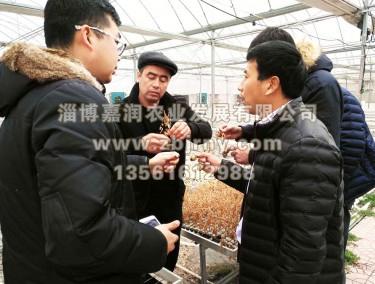张总与哈萨克斯坦技术人员交流