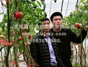 张总与哈萨克斯坦技术人员进棚区参观交流