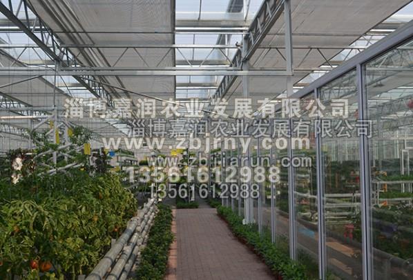 山东育苗温室建设